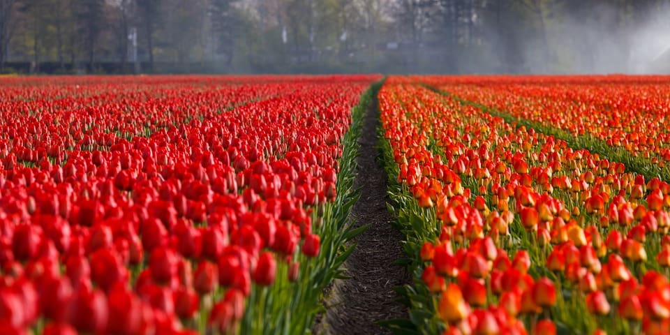 how to retire to netherlands